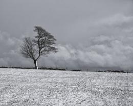 Peak District Tree