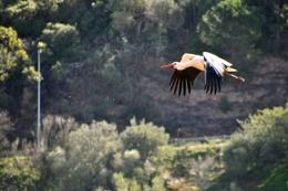 Algarve's Storks....