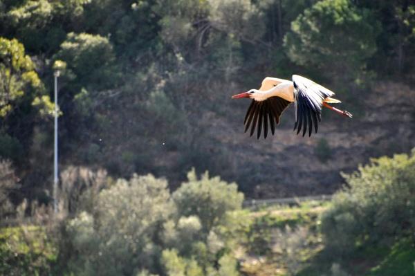 Algarve\'s Storks.... by Chinga
