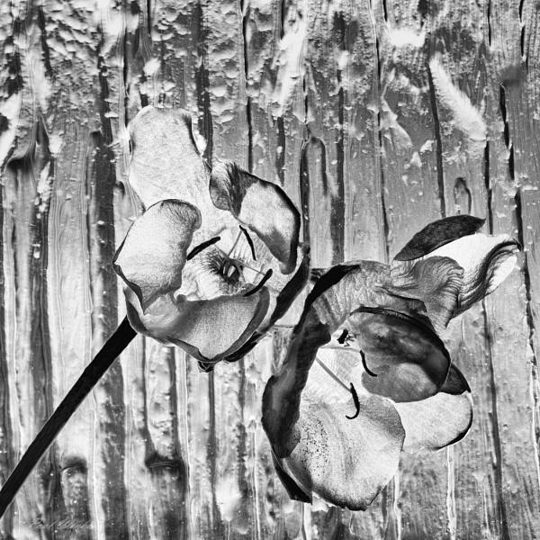 Untitled by Pwenham