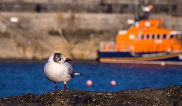The Gull and the Lifeboat by cats_123