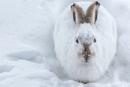 Killer Hare by StrayCat