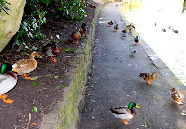 Bird walk by ddolfelin