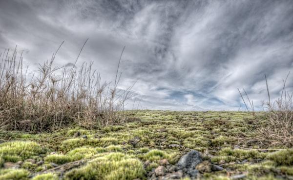 Mini Landscape by carper123