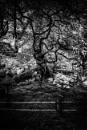 Portrait of a Twisty Tree by JohnnyG