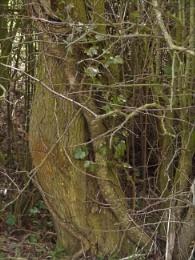bendy tree trunk