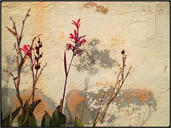 valentine flowers by FabioKeiner
