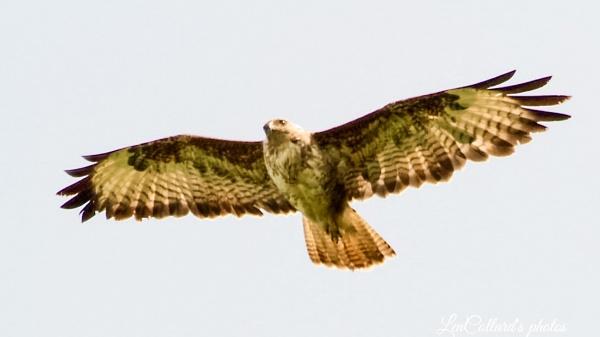 Flying high by Lencollard
