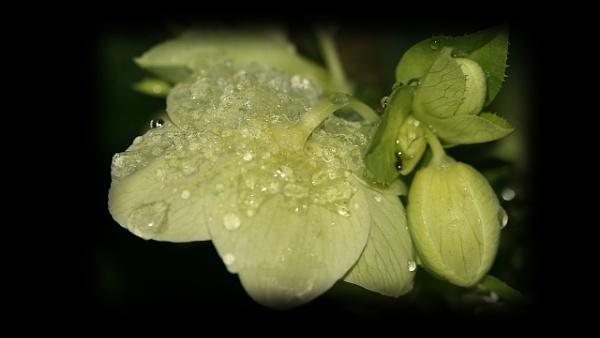 A touch of frost by IreneClarke