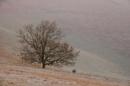 tree... by alfpics