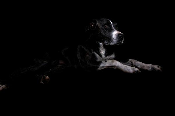 Dog portrait by kip55