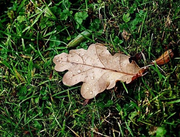 Lone leaf by KrazyKA