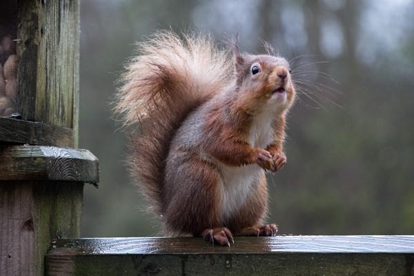 Sniffing Out The Next Hazelnut by SocksAndStuff