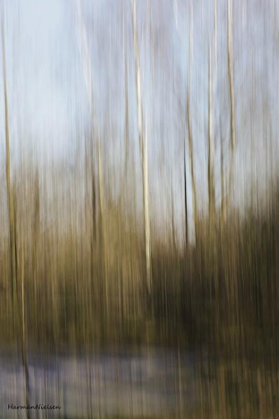 birches at a frozen pond by HarmanNielsen