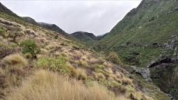 Mountain Grasses