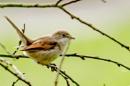 bird by madbob