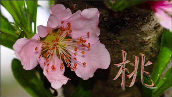 Signs of Spring by GeorgeP