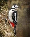 Woodland Wildlife by aliciabeesley
