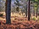 Woodland walk by Kurt42