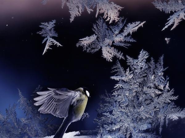 winterdream by maratsuikka