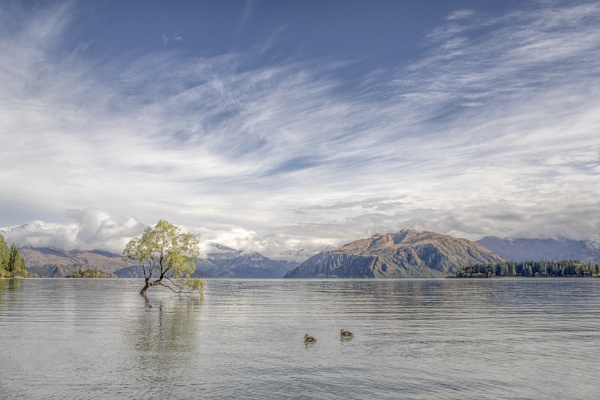 Wanaka Tree by pink