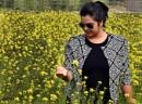 Tota in mustard flower field by debu