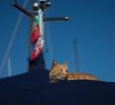 Ship's cat by HarrietH