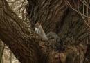 grey squirel by robthecamman