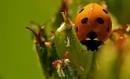 Ladybird macro by georgiepoolie
