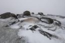 Stone Cold by Trevhas
