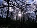 Winter walks in the woods. by pentaxpatty