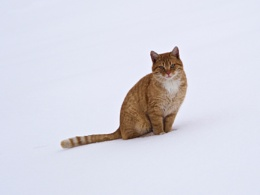 Photo : Cat in the Snow