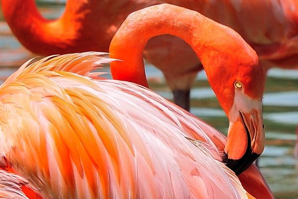 Flamingo eye by BiffoClick