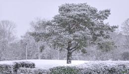 Still It Snows.