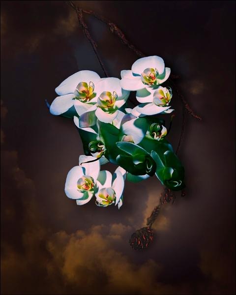 Flowers by Moss_Garden