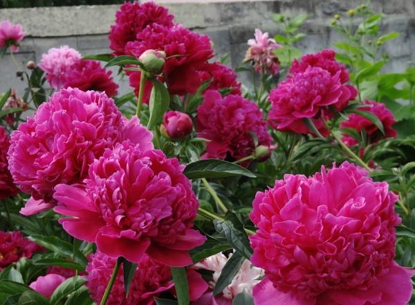 Flowering blast by SauliusR