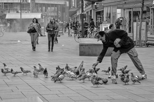 Pigeons and man by joop_