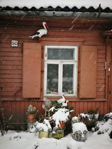 Wintering storks by Sony2