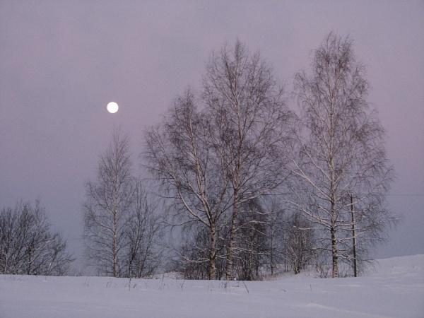 Winter Sun by Algimantas
