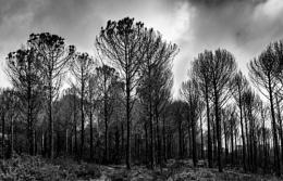 Burned forest