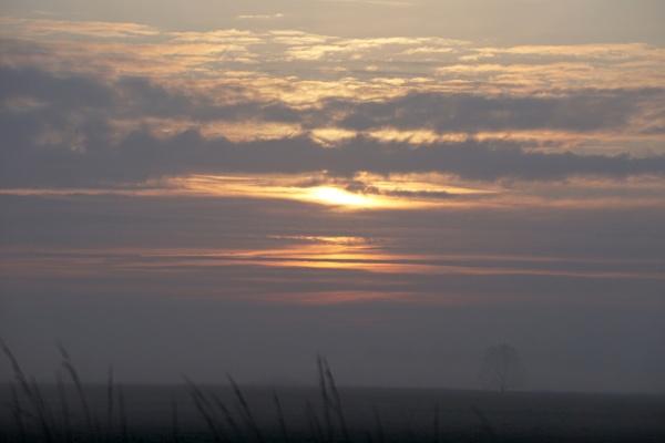 Foggy Start by tincanstorm