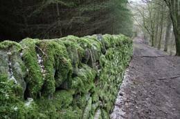 Mossy walk