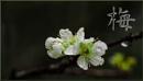 Spring is around the corner by GeorgeP