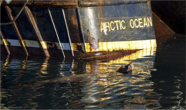 Arctic Ocean by Daisymaye