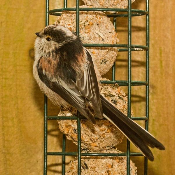 Bird Feeding by 41sPH0T0S
