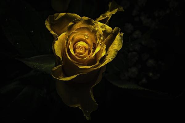 golden swirls by meyeview