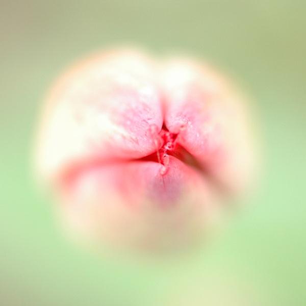 Tulip tomorrow by St_Fuagowi