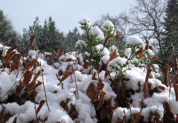 Powder puff snow by derekp