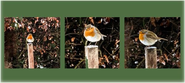 Robin on a stick by derekp