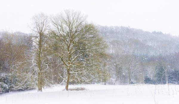 Snowfall by DalesLass